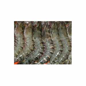 Black tiger prawns